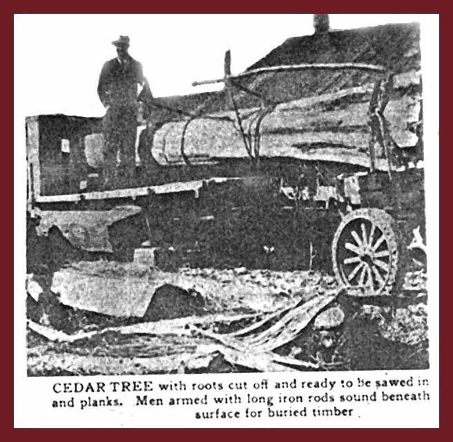 Cedar tree loaded onto the back of a truck