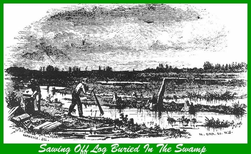 Old etching of working in a cedar swamp