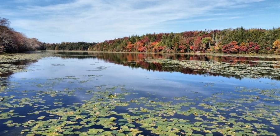 Magnolia Lake with autumn foliage