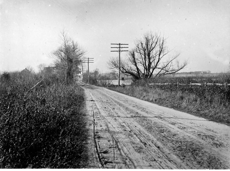 Unpaved road with tall grass and trees on both sides