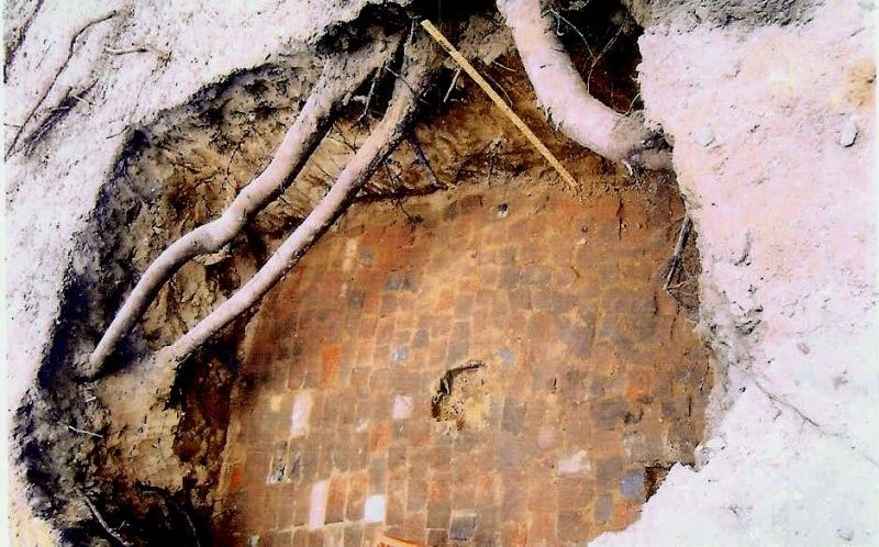 Seibert brick Root Cellar unearthed with tree roots growing over it