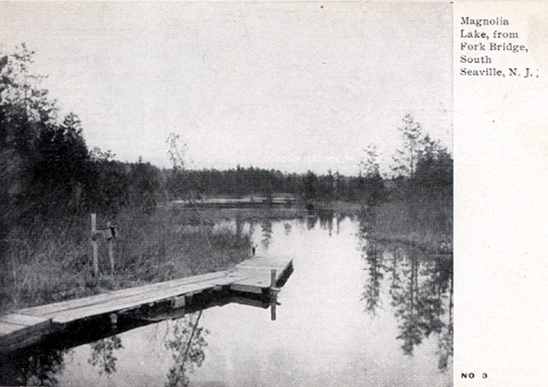 Magnolia lake with a wooden dock