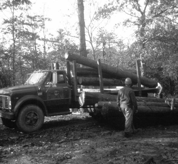 Cedar logs being loaded on a flat bed truck