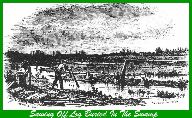 Wood etching of sawing off a log buried in the swamp