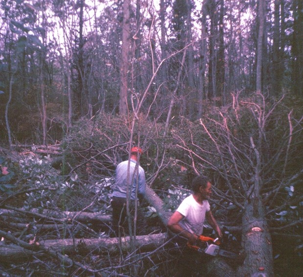 Men trimming the branches off downed trees