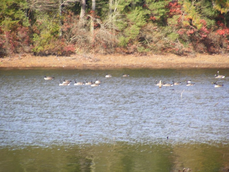 Nummy Lake vwith geese
