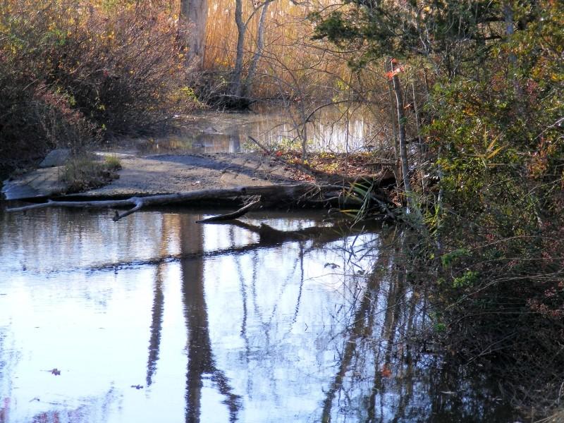 Pickle Lake - creek with fallen log across it